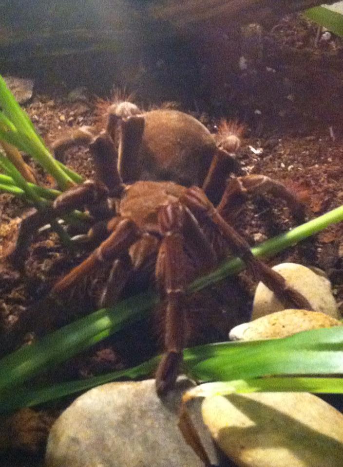 spinnenausstellungkassel